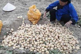 """Hàng tấn khoai tây của nông dân Việt ế ẩm chờ """"cứu"""", vẫn nhập khoai rẻ bèo từ Trung Quốc"""