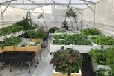 Bà mẹ trẻ ở Sài Gòn dựng hẳn khung thép trên sân thượng để trồng vườn rau quanh năm xanh tốt
