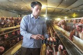 Lãi 4 tỷ/năm nhờ bỏ phố về quê nuôi gà, vịt