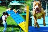 """Sài thành """"chơi trội"""": Thuê sân bãi làm sân chơi cho chó cưng"""