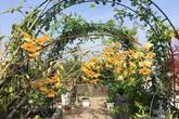 5 năm trồng hoa trên sân thượng, mẹ Hải Phòng giờ có vườn hoa hồng đẹp như công viên
