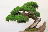 Những loại cây người nhà giàu không bao giờ bày trong nhà dù đẹp và sang đến đâu