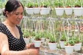 Trở thành nữ tỷ phú xứ dừa Bến Tre nhờ hoa treo, kiểng lá