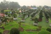 Khám phá vườn tùng đẳng cấp của đại gia Thái Nguyên