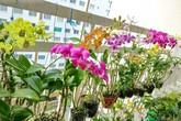 Mê mẩn vườn hoa lan 60 chậu nở rực trên ban công vỏn vẹn 4m² của nữ nhà báo U60