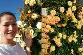 Xiêu lòng trước vườn hoa hồng đẹp như tiên cảnh của mẹ Việt ở Úc