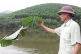 Bỏ túi trăm triệu/năm nhờ nuôi cá trên núi phục vụ người thích câu cá