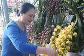 Vườn lan tiền tỷ trên cao nguyên Mộc Châu của người phụ nữ yêu lan