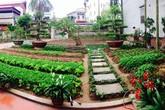Cô giáo tiểu học mua 90 khối đất về cải tạo vườn rau đẹp như công viên