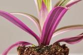 Nếu đã chán những chậu cây màu xanh, hãy thử trồng những cây màu hồng ngọt ngào này