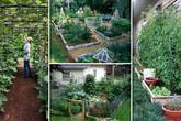 Những cách sáng tạo để biến mảnh đất trống thành vườn rau đẹp mắt