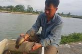 Chàng trai 8X kiếm 400 triệu/năm từ đàn cá rô