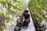 Trồng dưa lưới Nhật lãi trăm triệu mỗi tháng ở Sài Gòn