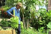 Người phụ nữ đảm đang kiếm 500 triệu đồng mỗi năm từ vườn cây ăn quả
