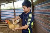 Trai xứ Lạng nuôi gà sáu ngón quý hiếm, mỗi tháng lãi gần 10 triệu