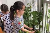 Căn hộ với hệ thống trồng rau sạch thông minh ở ban công của Diva Hồng Nhung giữa lòng Sài Gòn