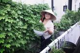 """Nhớ món ăn quê hương, mẹ Việt ở Nhật quyết trồng vườn """"bội thu"""" rau quả sạch, nhìn mê ngay"""