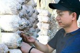 Trương Ngọc Ánh thu 1 tỷ đồng mỗi năm từ trồng nấm bào ngư