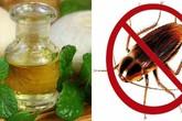 """6 cách đuổi gián """"triệt để"""" đơn giản bằng nguyên liệu tự nhiên, không dùng hóa chất"""