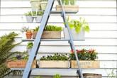 Mẹo nhỏ tận dụng kệ tầng đã cũ tạo vẻ đẹp cho không gian sân vườn
