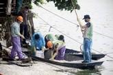 Hà Nội: Đã vớt xong hơn 20 tấn cá chết ở hồ Tây