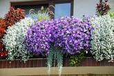 Ban công đẹp lung linh khi biết chọn những loài hoa này để trồng