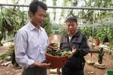 'Bướm đại ngàn': Giật mình cây lan 20 cm giá 1,1 tỷ đồng
