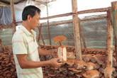 Làm giàu từ trồng loại nấm siêu lợi nhuận