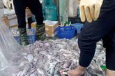Đủ mối nguy khi ăn phải bạch tuộc ngâm hóa chất