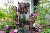 Người vợ trẻ khéo tay biến ban công vỏn vẹn 6m² thành khu vườn đầy hoa cỏ