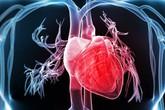 6 bệnh về tim mạch phổ biến cần biết để phòng ngừa tốt hơn