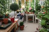 Khu vườn bạt ngàn rau quả sạch của người phụ nữ bắt đầu làm vườn từ năm 10 tuổi