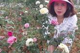 Từ trồng cho vui để ngắm, cô gái Sơn La đã có vườn hồng đáng giá vài tỷ đồng