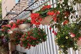 Ngôi nhà nhìn đâu cũng thấy hoa nở rực rỡ của ca sĩ Bích Phương ở quê