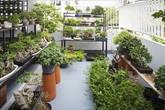 Ngôi nhà ống an yên với khu vườn bonsai khiến ai nhìn cũng ước ao