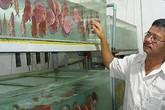 Bỏ ba ba, nuôi cá dĩa thu 100 triệu/tháng