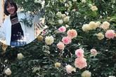 Vườn hồng vài nghìn gốc siêu quý 3000m2 của hot girl 8x Thái Nguyên