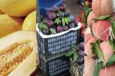 Những loại quả khổng lồ xuất xứ Trung Quốc bán ngập chợ Việt