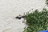 Phát hiện thi thể nam thanh niên dưới sông Đáy sau nhiều ngày mất tích