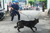 Hà Nội thành lập tổ phản ứng nhanh bắt chó thả rông