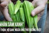 """Loại quả phổ biến ở VN được gọi là """"nhân sâm xanh"""" bổ thận hàng đầu, tốt cho gan, dạ dày"""