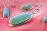 Viêm dạ dày do H.pylori có lây không?