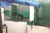 Trèo tường vào vườn thú, chàng trai Ấn Độ bị sư tử cắn chết