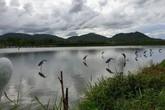 """Hình ảnh người dân giăng """"thiên la địa vọng"""" tận diệt chim trời ở Hà Tĩnh"""