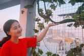 Ngọc Lan và Thanh Bình từng khiến người người ghen tỵ khi cùng nhau thu hoạch rau ở