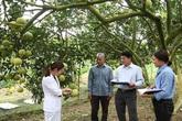 Vĩnh Phúc: Phát triển nông nghiệp trong thời đại công nghiệp