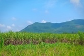 Huyện Nông Cống (Thanh Hóa): Hàng trăm hộ dân lao đao vì doanh nghiệp mua nguyên vật liệu không trả tiền