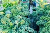 Vườn sân thượng 40 m2 tốt như trang trại