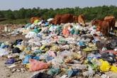 """Kinh hoàng những bãi rác """"khổng lồ"""" nằm ngay trên đê chống lũ"""