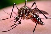 Vượt qua biến chứng của bệnh sốt xuất huyết nhờ bộ đôi cốm Subạc và gel Subạc